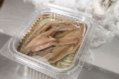 Anchovies on ice at the fish market. Anchovies on ice at the fish market Stock Photos