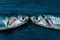 Anchovies kiss Royalty Free Stock Photos