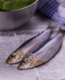Anchovies on a newspaper with green pods. And a kitchen towel Stock Image