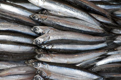 Anchovies on plate. Fresh anchovies at a fish market in Istanbul royalty free stock images