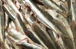 Anchovies ready to be cooked Royalty Free Stock Images