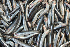 Anchovies for sale Stock Image