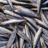 Fresh anchovies for sale, top view. Anchovies for sale, top view, fresh sea food background Stock Photo