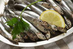 Anchovies Royalty Free Stock Photography