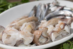 Anchovies and squids of the mediterranean Stock Photos