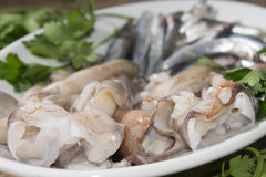Anchovies and squids of the mediterranean Royalty Free Stock Images