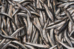 Anchovies on a street fish bazaar stand in Istanbul, Turkey Stock Image