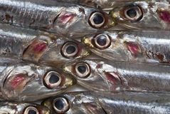 Anchovies texture. Royalty Free Stock Photography