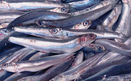 Anchovy. A group of grey anchovy royalty free stock photo