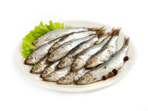 Anchovy. Salted anchovy on white plate Stock Photos