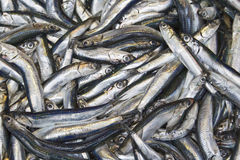 Anchovy. In the bazaar. A very important fish in Turkish culture esp. for Blacksea region Stock Photo