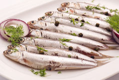 Anchovy. With herbs and onion Royalty Free Stock Image