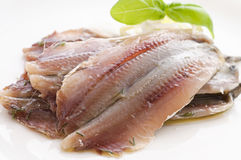 Anchovy Stock Images