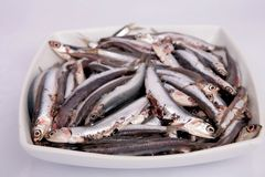 Anchovy. Fresh fish anchovy in a white bowl for cook Stock Photography