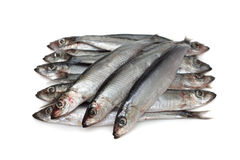Anchovy Stock Image