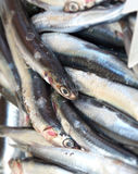 Anchovy fish Stock Photos