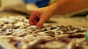 Anchovy from fishmonger in Spain with flies Stock Images