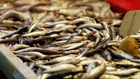 Anchovy from fishmonger in Spain with flies Royalty Free Stock Photos