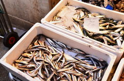Anchovy. Fresh anchovies in Rialto market, Venice Royalty Free Stock Photo