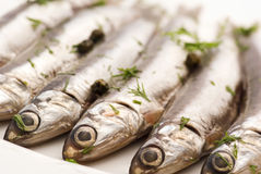 Anchovy marinated. With fresh herbs Royalty Free Stock Photos