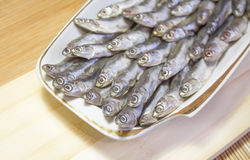 Anchovy salted fish on a platter. Anchovy salted fish on a white platter Royalty Free Stock Photography