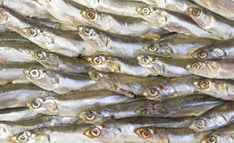 Anchovy salted fish on a platter. Anchovy salted fish on a white platter Stock Photos