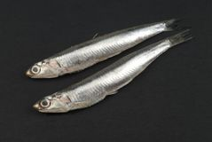 Anchovy Royalty Free Stock Photos