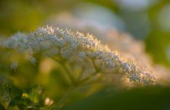 Anciano-flor Imagenes de archivo