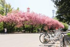 Ancien bureau du gouvernement du Hokkaido Image libre de droits