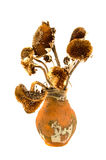 Ancient aged clay jug with old dry yesteryear sunflower heads Stock Image