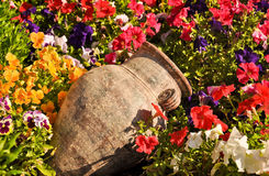 Ancient amphora between flowers Royalty Free Stock Photography