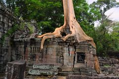 Ancient Angkor Era temple overgrown by trees Royalty Free Stock Images