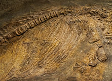 Ancient animals fossils in the rock Stock Images
