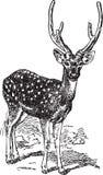 Ancient Animals Royalty Free Stock Photo