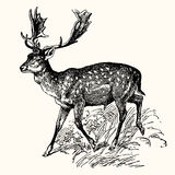Ancient Animals. Vector engraving image of ancient animals - deer Stock Image