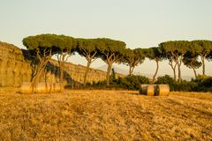 Ancient aqueduct and vegetation during the sunset Royalty Free Stock Photography