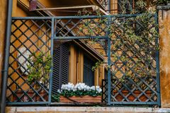 Ancient balcony with flowers in Rome, Italy. Italian balcony. Italian architecture. Ancient balcony with flowers in Rome, Italy Stock Photo