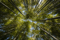 Ancient bamboo forest Stock Photos