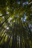 Ancient bamboo forest Royalty Free Stock Images