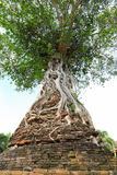 The ancient Banyan tree Royalty Free Stock Photography