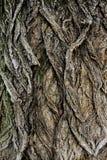 Ancient Bark Texture. Ancient Dark Bark Texture detail macro close up Stock Image