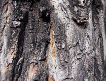 Ancient Bark Texture. With dark shadows Royalty Free Stock Photos