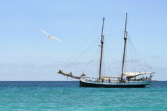 Ancient boat and seagull. Royalty Free Stock Photo