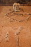 Ancient Bones Stock Image