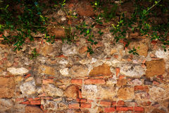 Ancient brick, stone wall with ivy. Vintage, grunge background Royalty Free Stock Image