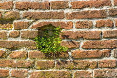 Ancient brick walls with window and green plants Royalty Free Stock Photo