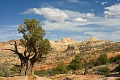 Ancient Bristlecone pine Stock Photography
