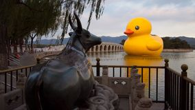 The ancient bronze bull and the modern big yellow duck Royalty Free Stock Photography