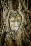 Ancient Buddha Entwined Within Tree Roots in Thailand Stock Photography