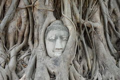 Ancient Buddha face on the tree in Thailand Royalty Free Stock Images